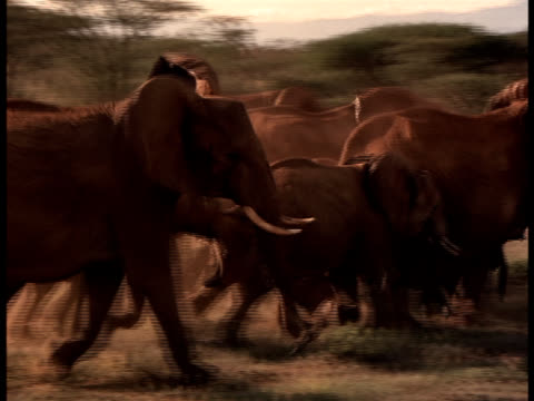 A herd of running elephants.