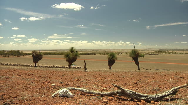 stockvideo's en b-roll-footage met ws herd of sheep being followed by pick up car through dry plains, animal skull in foreground / western australia - groothoek