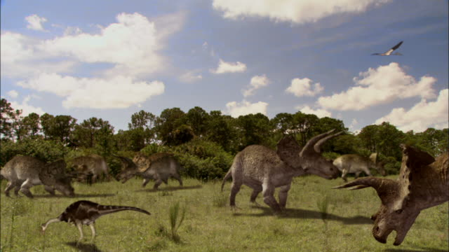 a herd of triceratops grazes in a meadow. - triceratops stock videos and b-roll footage