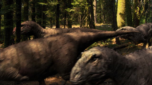 cgi, ms, herd of tyrannosaurus rexes walking through forest - paleozoology stock videos and b-roll footage