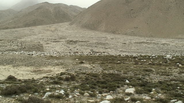 vídeos de stock, filmes e b-roll de ws zi herd of wild cattle in landscape, mt everest base camp, tibet - camurça