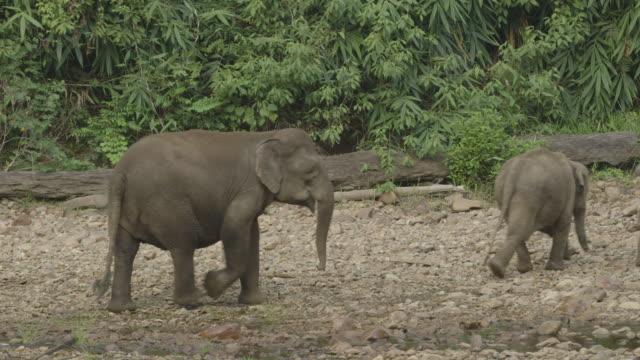 herd of wild elephants charging away. - elephant stock videos & royalty-free footage