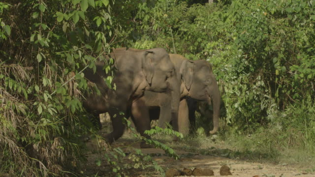 herd of wild elephants feeding on river bank. - elephant stock videos & royalty-free footage