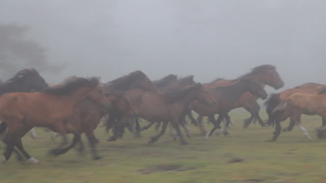 w/s herd of wild horses in the mist - galicia stock videos & royalty-free footage