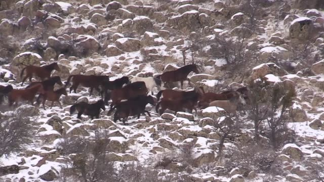 a herd of wild horses is seen on the snowcovered foothills of murat mountain in western turkish province of usak on january 09 2019 - foothills stock videos & royalty-free footage