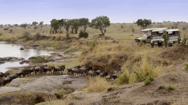 Herd of wildebeest crossing Mara River on annual migration, Serengeti