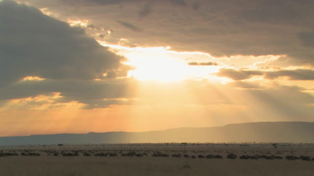 ws, herd of wildebeests (connochaetes taurinus) walking through savanna, sunbeams shining through clouds, masai mara, kenya - savannah stock videos & royalty-free footage