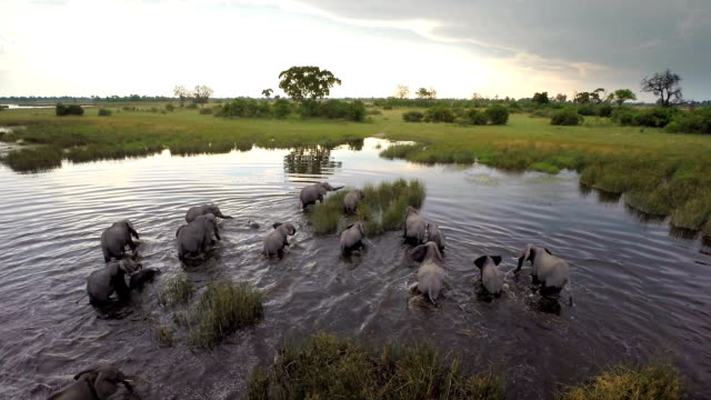 Herd on the move through the water