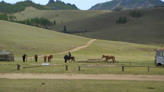 vídeos de stock e filmes b-roll de herder with horse on green landscape against mountains - ulaanbaatar, mongolia - ulan bator