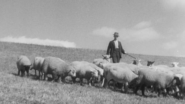 1937 montage herder with sheep / united kingdom - herder stock videos & royalty-free footage