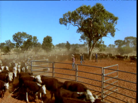 herders drive cattle through pen on dusty ranch in outback, alice springs, australia - ranch stock videos & royalty-free footage