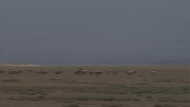 vidéos et rushes de herders tend to grazing livestock in kenya. - cattle