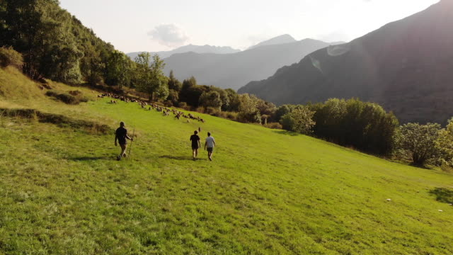 Herding goats in Spain mountains, aerial