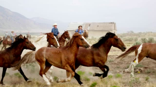 herding horses - utah stock videos & royalty-free footage