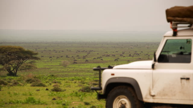 herds of wildebeest from the perspective of a safari landcover - 4x4 stock videos and b-roll footage