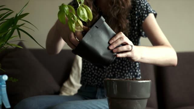 vídeos y material grabado en eventos de stock de ¡aquí no pasa nada! - jardinería