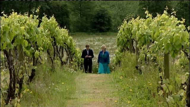 herefordshire: ext vineyard on hillside close shots of vines jeanie falconer interview as along with reporter sot simon parker set-up looking at... - herefordshire bildbanksvideor och videomaterial från bakom kulisserna