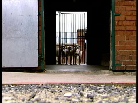 ledbury: ext lms fox hounds seen in enclosure through gate cms fox hounds crowded around gate tilt upk cms donald hadan interview sot - had no idea... - herefordshire stock videos & royalty-free footage