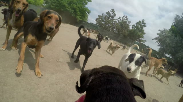 here's how paradise looks for dogs - large group of animals stock videos and b-roll footage