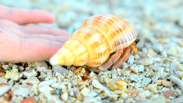 Hermit crab come back to the nature