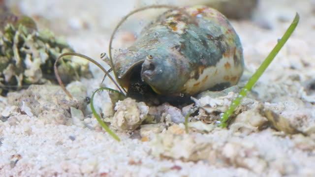 A hermit crab in an aquarium
