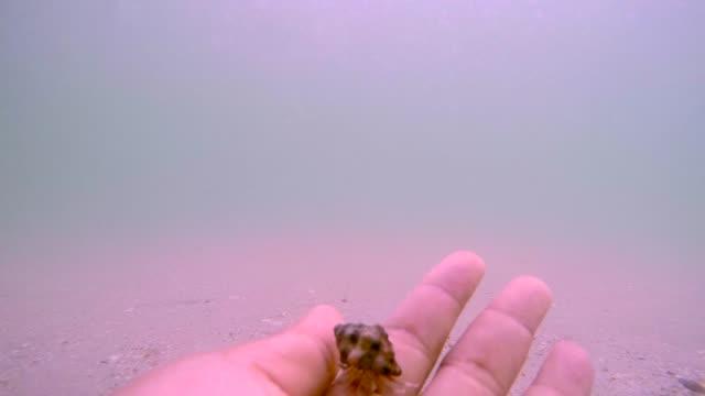 vídeos de stock e filmes b-roll de hermit crab on hand. - parte do corpo animal
