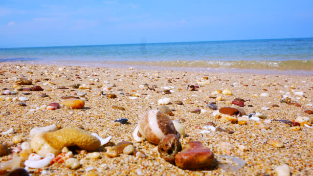 hermit crab on the beach. stock video - animal shell stock videos & royalty-free footage