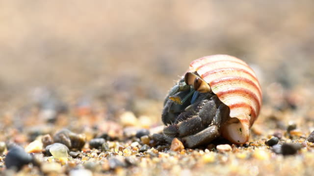 ecu hermit crab on the beach - hiding stock videos & royalty-free footage
