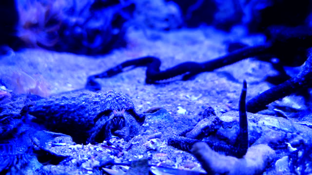 Hermit crab on the sand at the bottom of fish tank