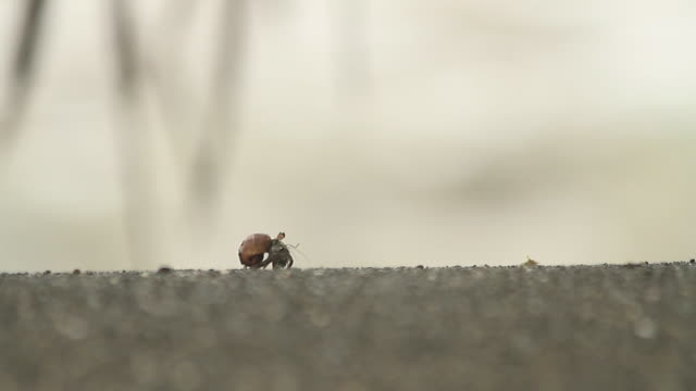 hermit crab walking along the sand - hermit crab stock videos & royalty-free footage