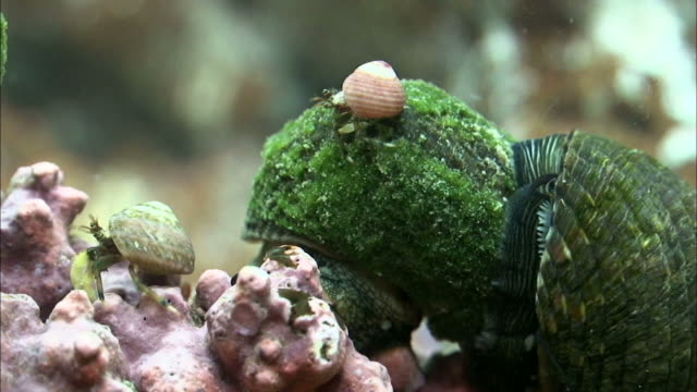 hermit crabs and gastropods in tidepool of seogwipo, jeju island, south korea - animal shell stock videos & royalty-free footage