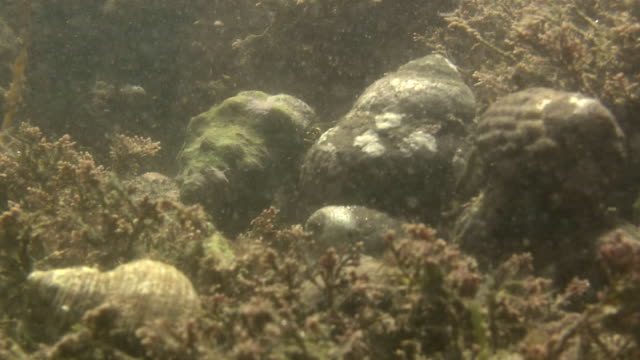 vidéos et rushes de hermit crabs under water - organisme aquatique