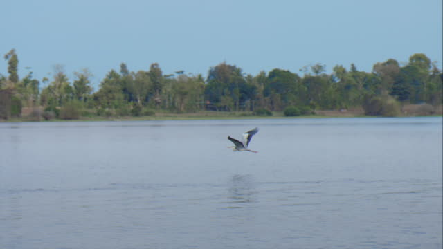 a heron flying over the water - heron stock videos & royalty-free footage