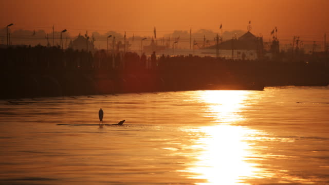Heron scanning fast flowing river at sunset at the Kumbh Mela, India