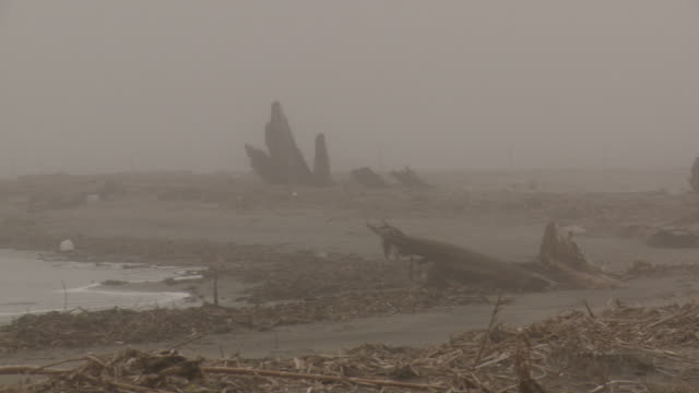 A heron stands on a shoreline littered with debris in a dense fog.