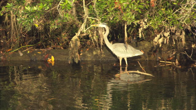 heron walking along shore,  florida, north atlantic ocean  - north atlantic ocean stock videos & royalty-free footage
