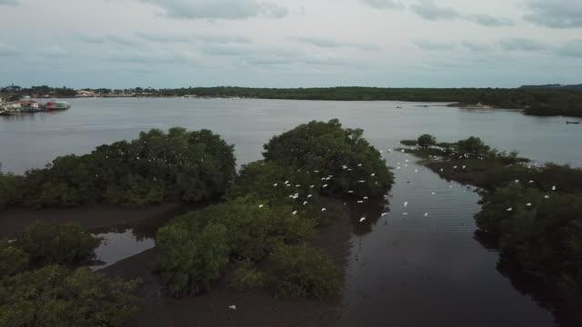 heron's flock in porto seguro, bahia, brazil - porto seguro stock videos & royalty-free footage