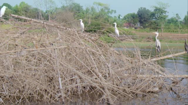 vidéos et rushes de herons nesting on the riverbank - création animale