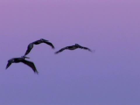 vídeos y material grabado en eventos de stock de herons - grupo pequeño de animales