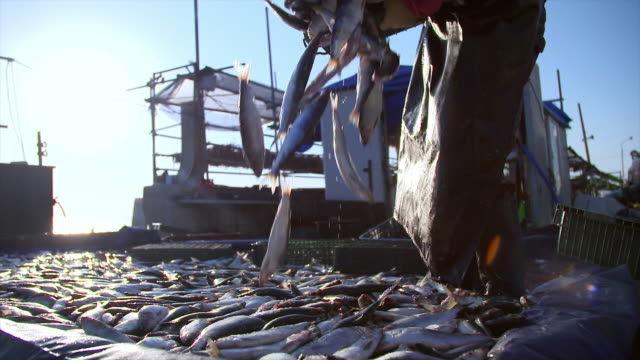stockvideo's en b-roll-footage met herring falling on the floor - documentairebeeld
