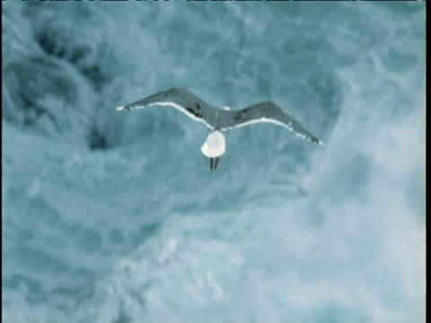 herring gull soars over stormy sea - seagull stock videos & royalty-free footage