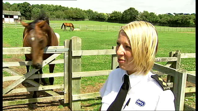 potters bar rspca southridge animal centre natalie bartle interview sot - rspca stock-videos und b-roll-filmmaterial
