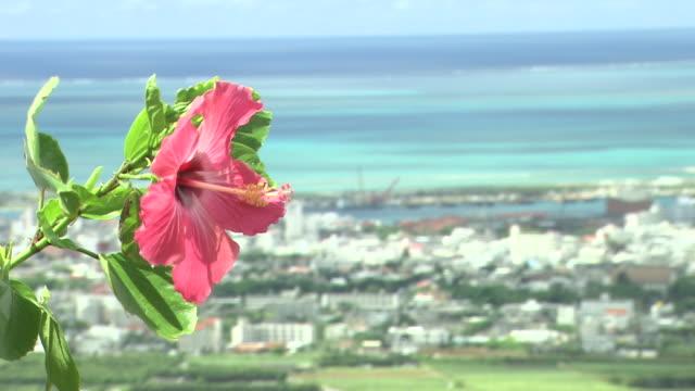 hibiscus flower and townscape, okinawa, japan - eibisch tropische blume stock-videos und b-roll-filmmaterial