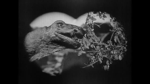 1925 hidden explorers watch long neck dinosaur eating tree leaves - binoculars stock videos & royalty-free footage