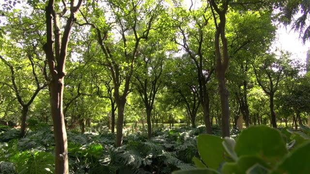 stockvideo's en b-roll-footage met hidden forest in the midst of the real alcazar - schaduwe