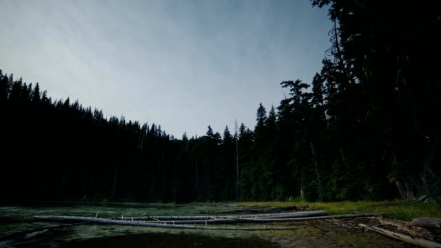 Hidden lake marsh at night overcast and moonlight with stars in Mt. Hood forest