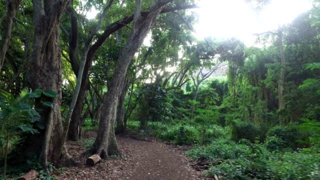 Versteckten Pfad tief in Maui Tropischer Wald in der Dämmerung
