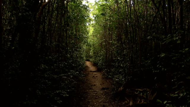 hidden tropical forest path on kauai island - pacific islanders stock videos & royalty-free footage