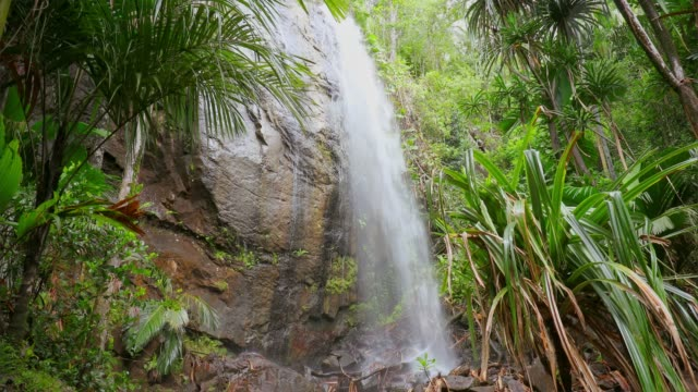 hidden waterfall in the vallée de mai palm forest in praslin island , seychelles , archipelago country in the indian ocean - seychelles stock videos & royalty-free footage