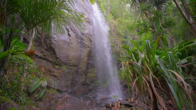 hidden waterfall in the vallee de mai palm forest in praslin island , seychelles , archipelago country in the indian ocean - seychelles stock videos & royalty-free footage